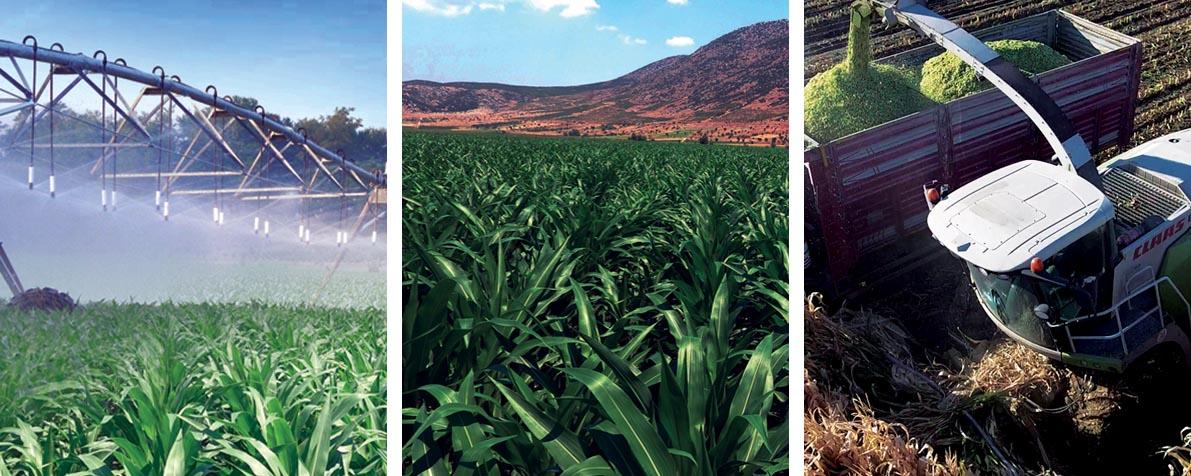 AtaSancak Acıpayam Tarım İşletmesi Bitkisel Üretim